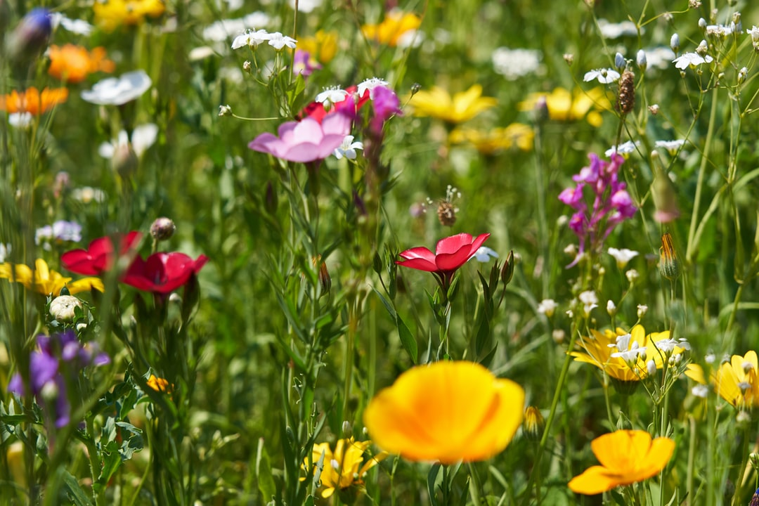 I found this colorful and blooming meadow in the middle of large roads in a city and cloud not only pass by. The colors of summer are very beautiful.