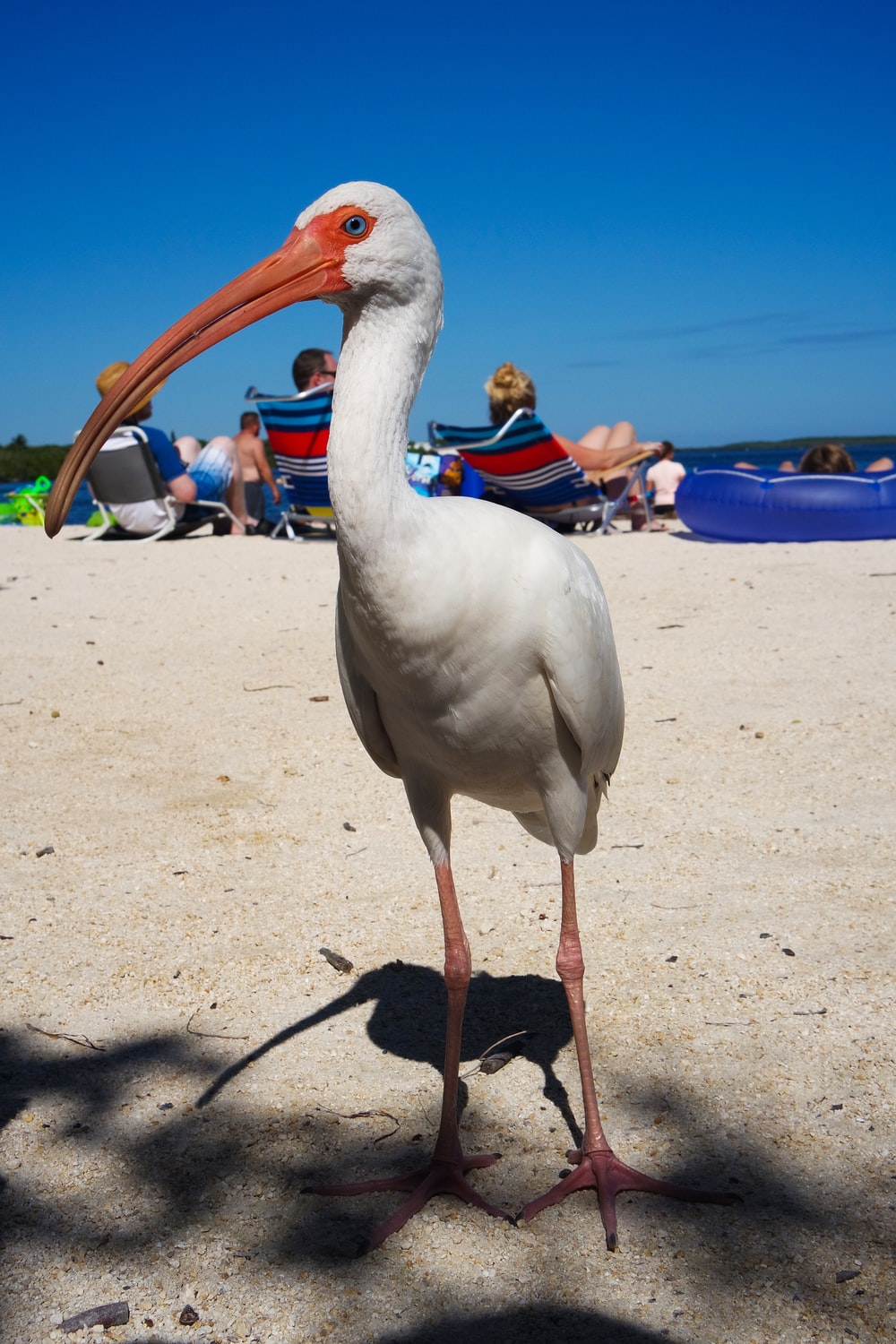 white flamingo on seashore