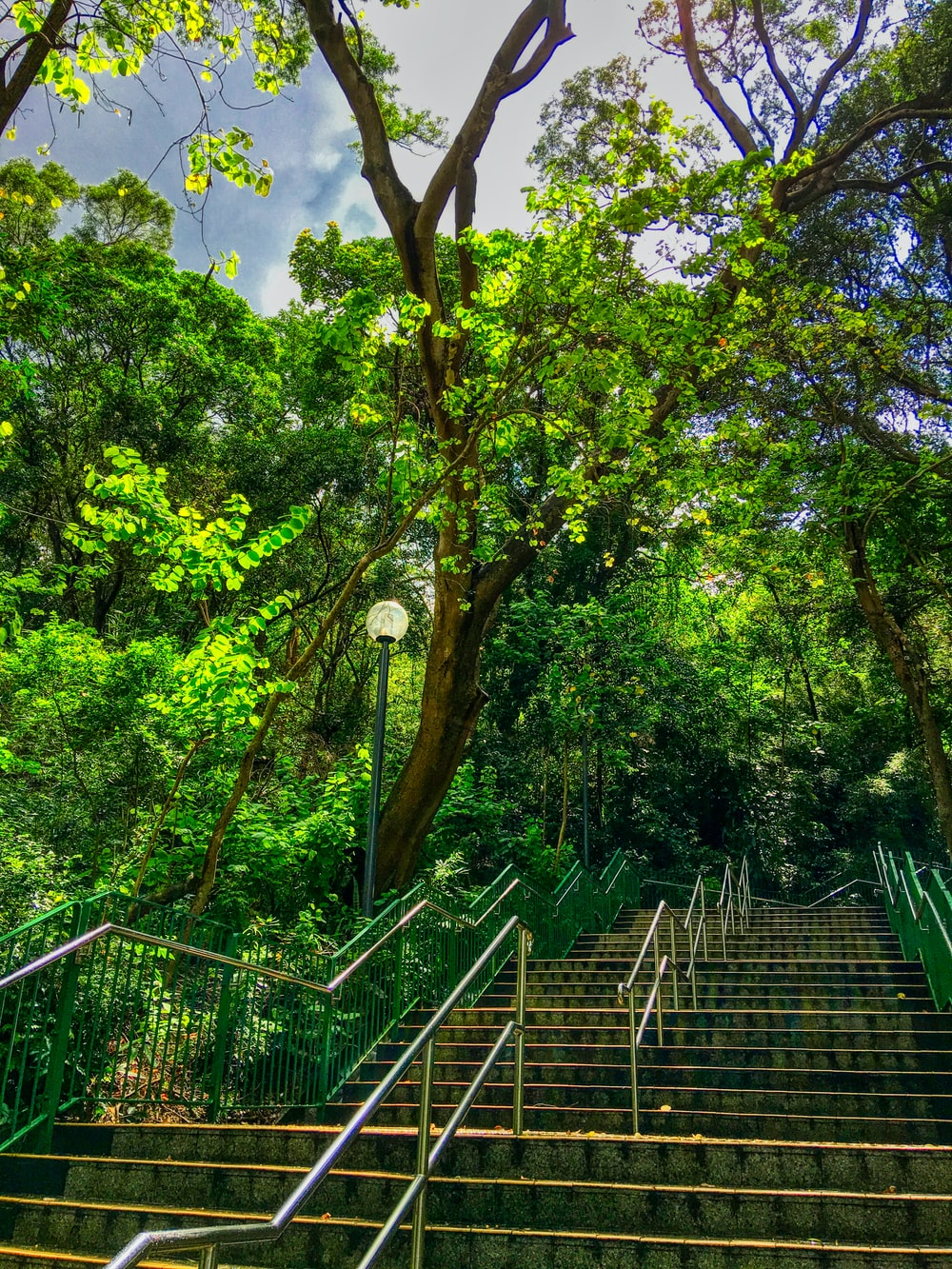 stairs with rails surrounded with trees