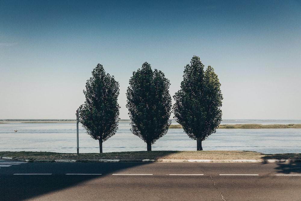 three green trees near coastal road