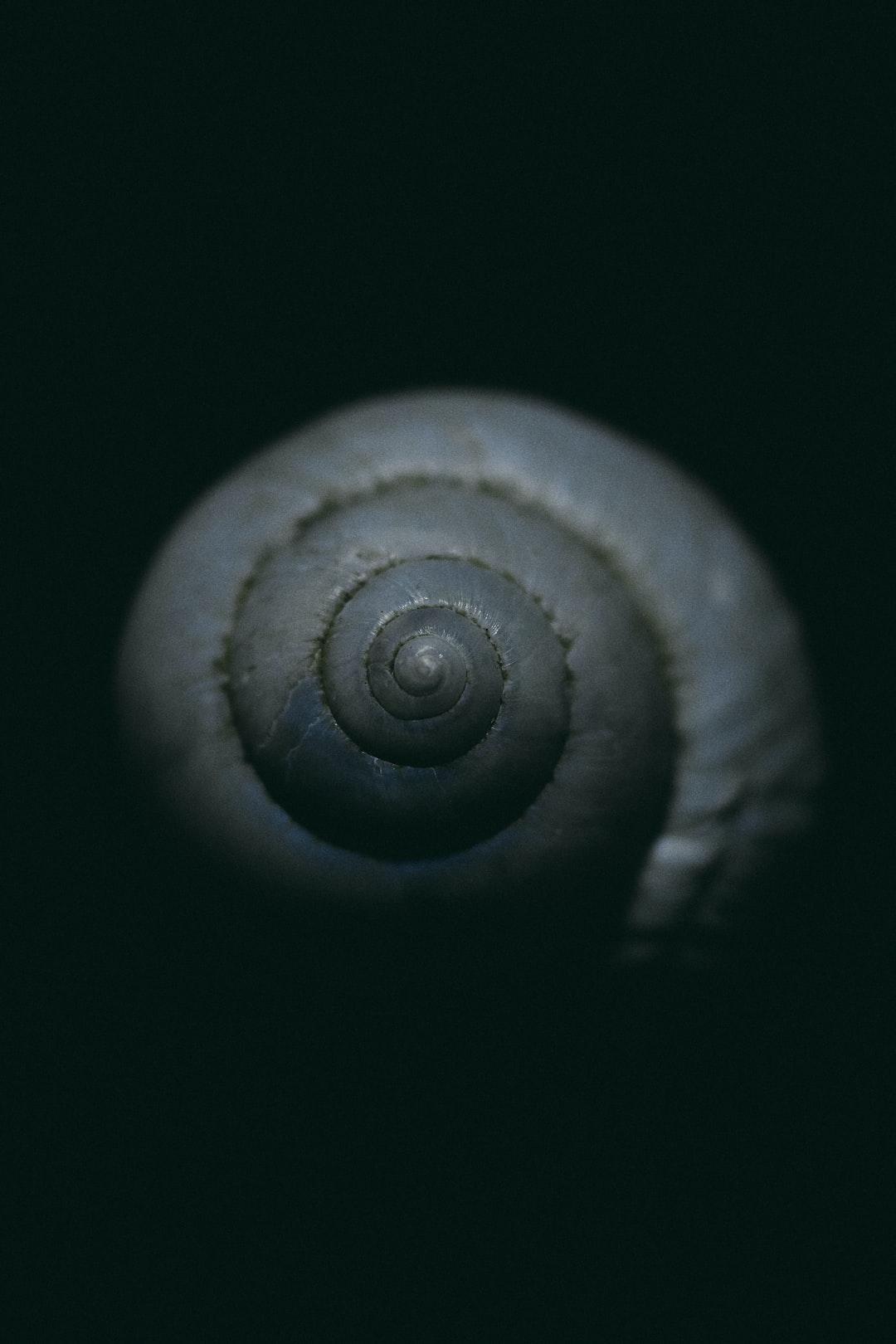 macro click of a shell