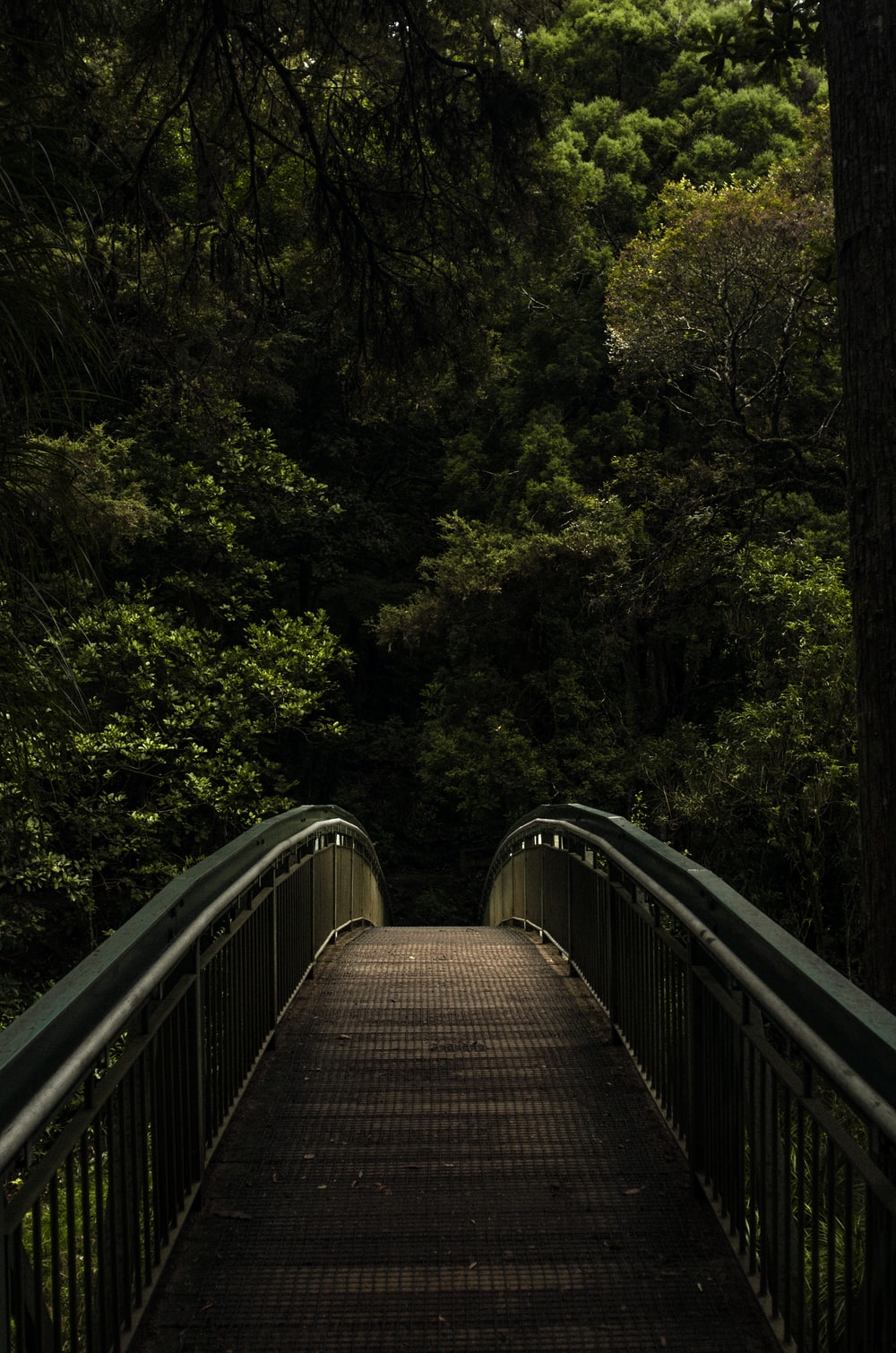 brown and grey footbridge in forest