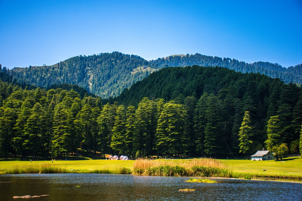 green pine tree lot