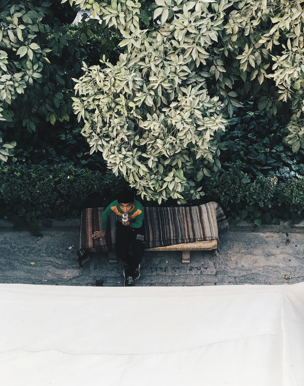 man siting near tree