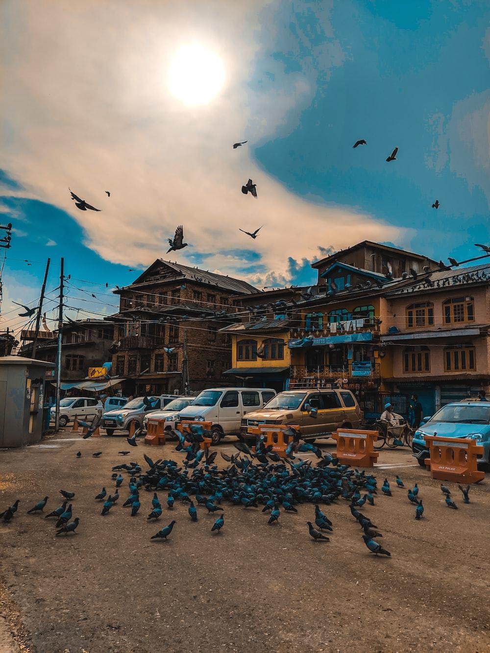 birds near parked vehicles