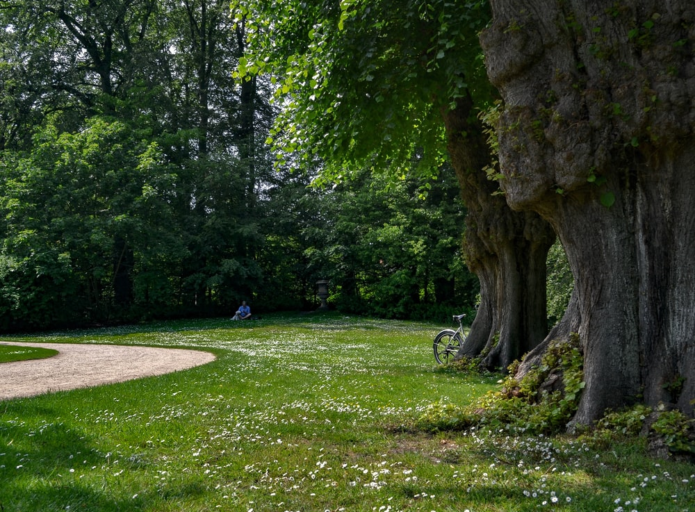 person sitting on grass surrounded with trees