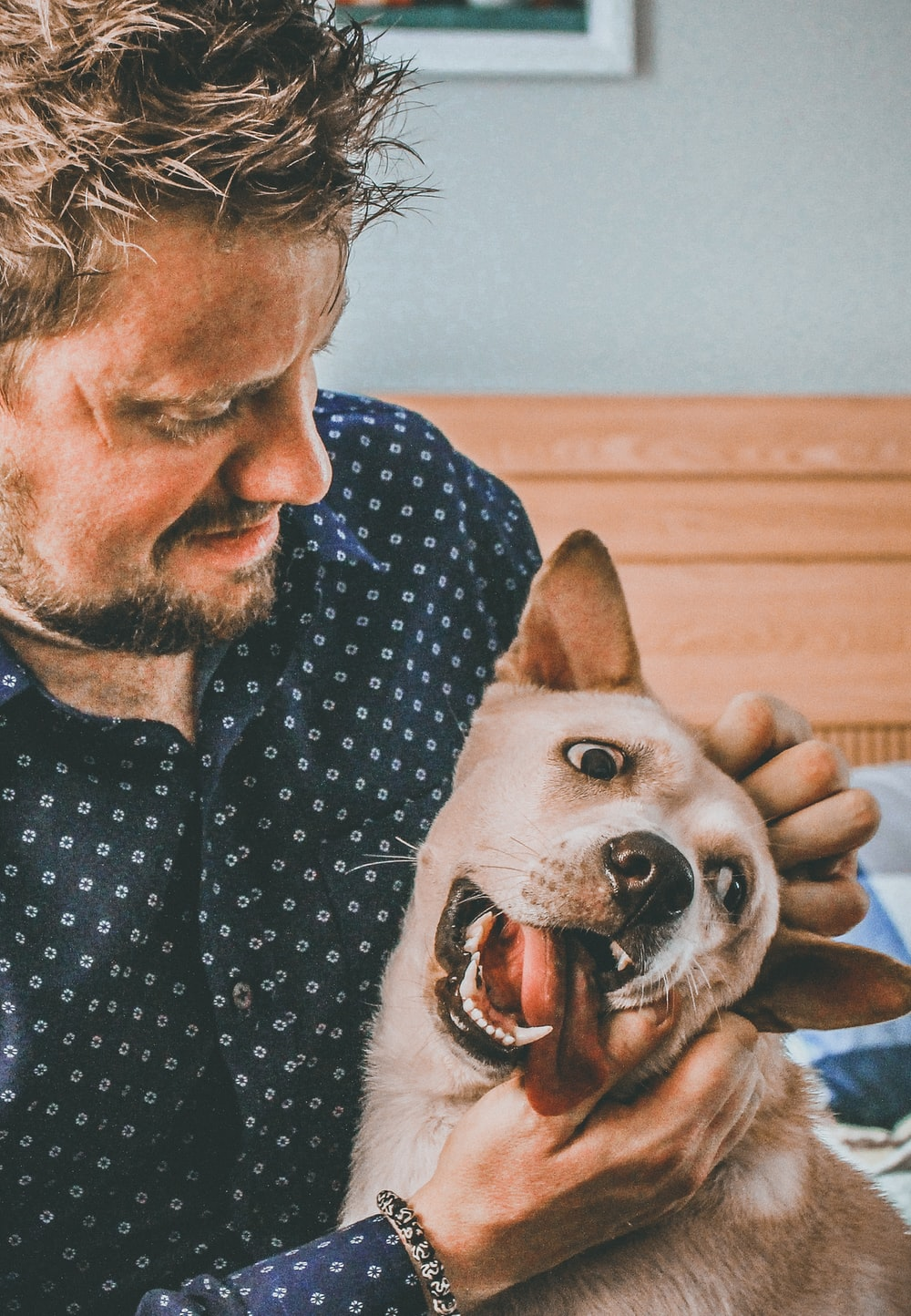 man petting short-coated brown dog in room close-up photography