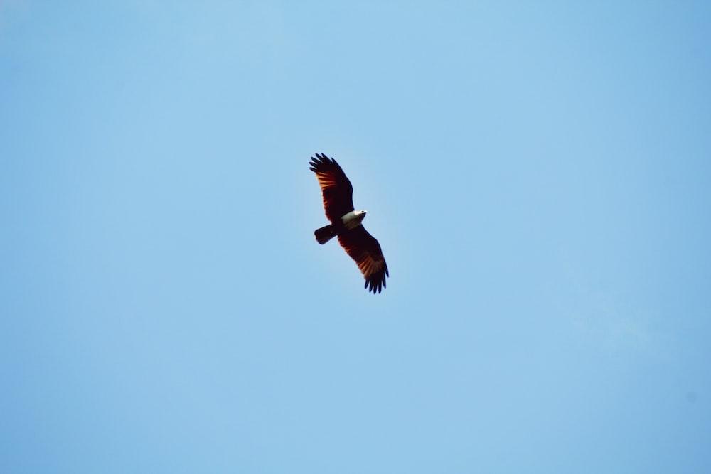 flying brown bird