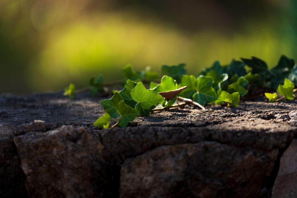 selective focus photography of green-leafed plant during daytime