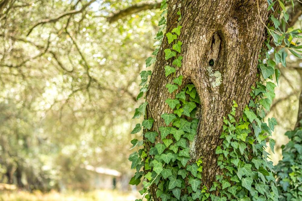 green-leafed plants on tree