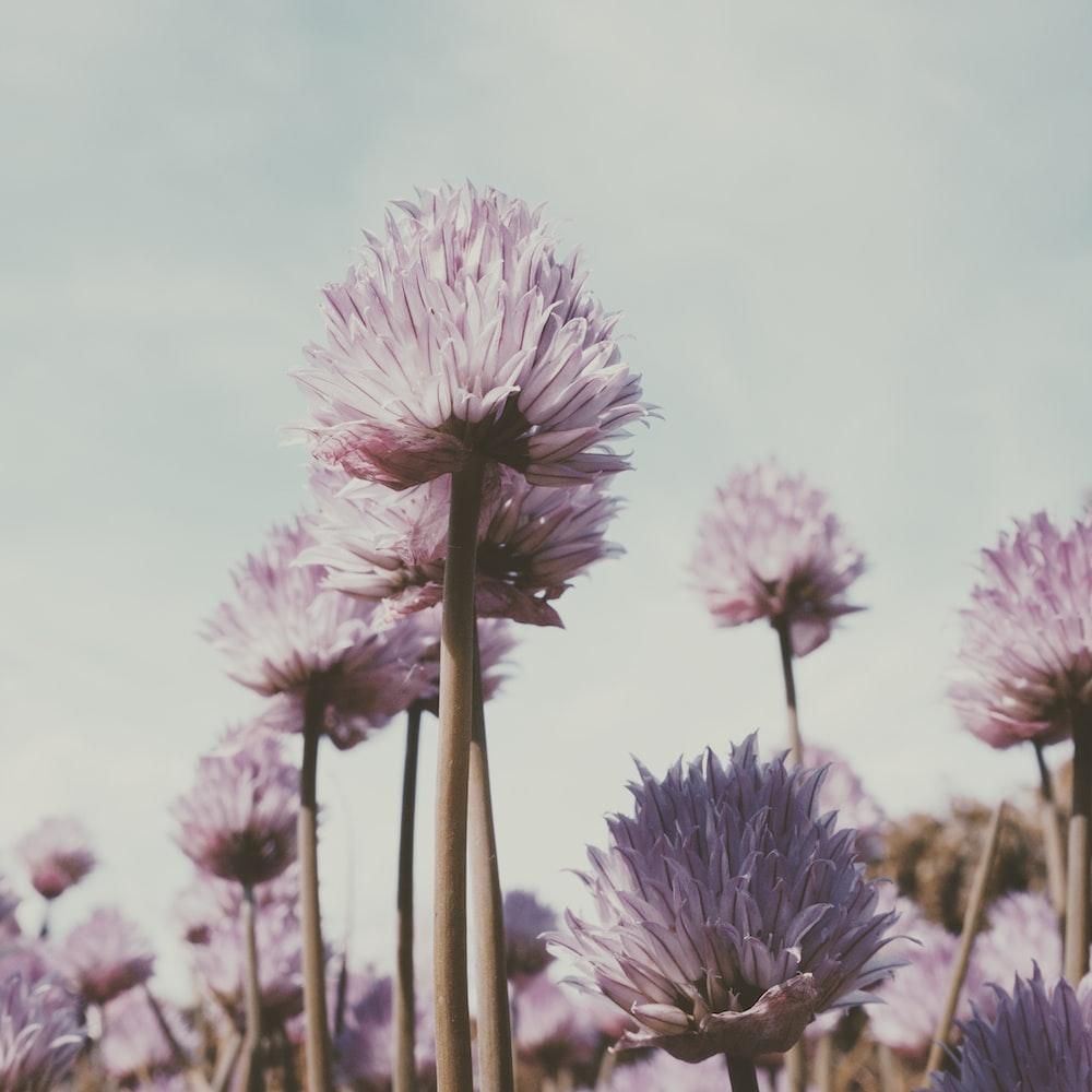 purple petaled flower lot