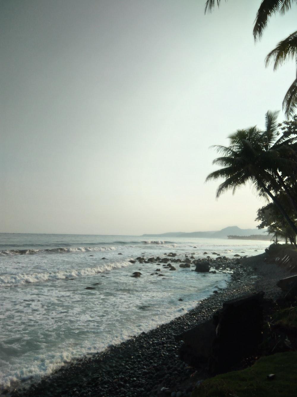 seashore and palm trees