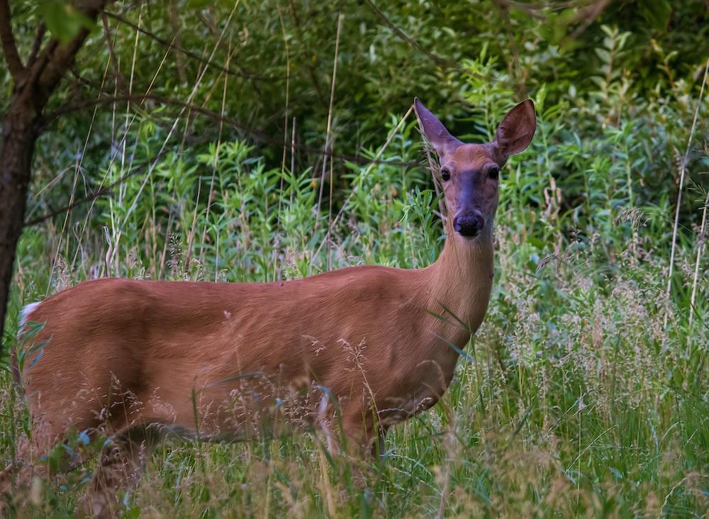 brown deer near green-leafed plants