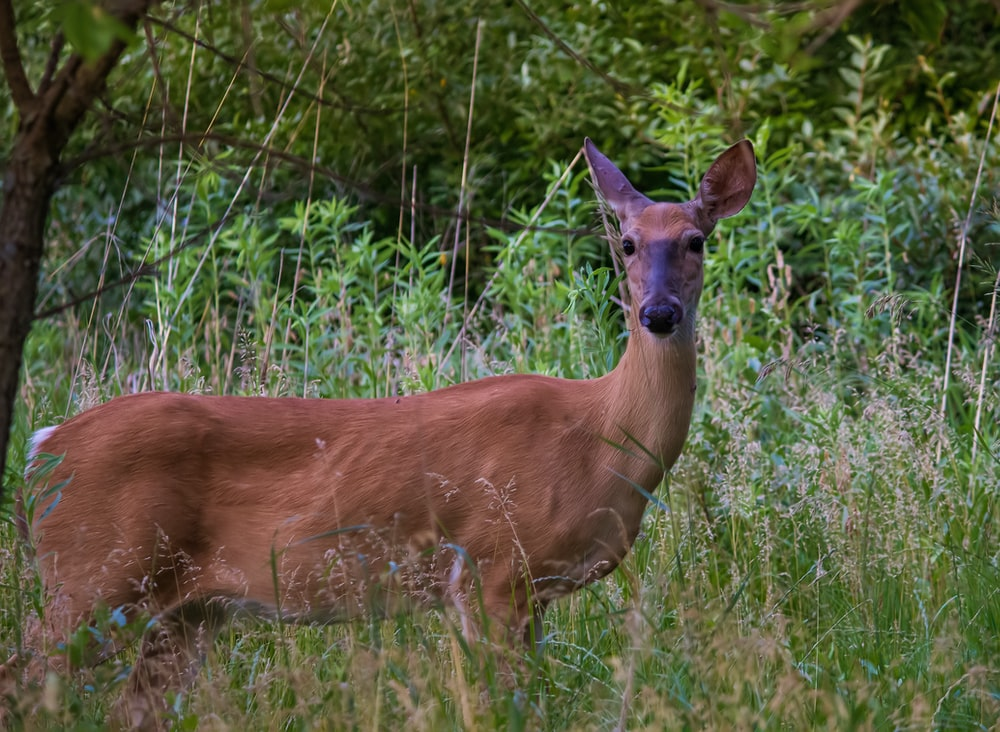 brown deer near green-leafed plants