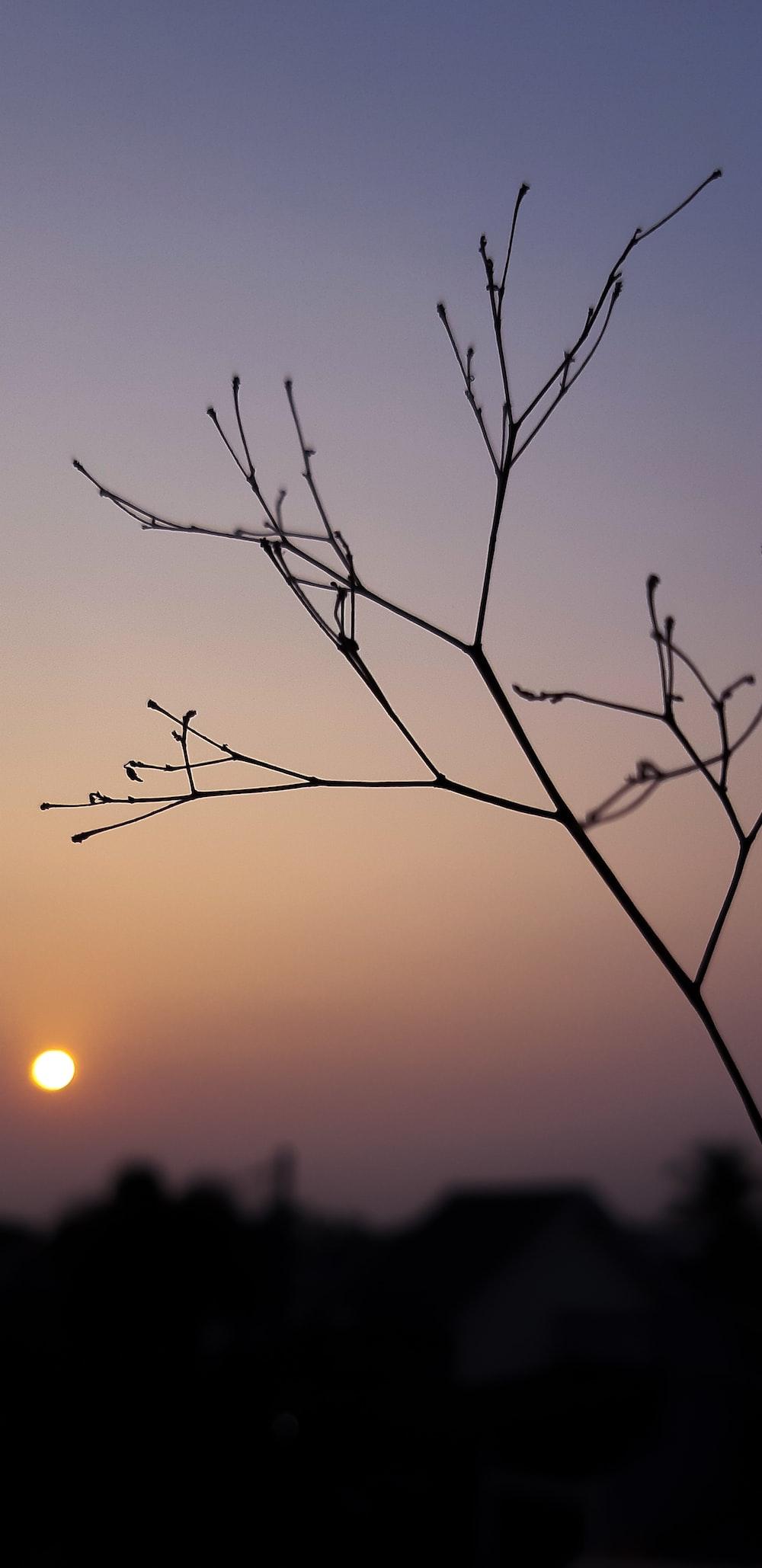 leafless branch