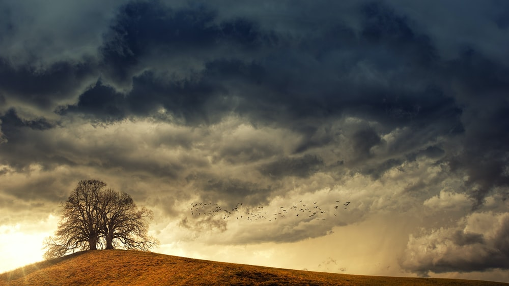 tree in desert under white clouds during daytime