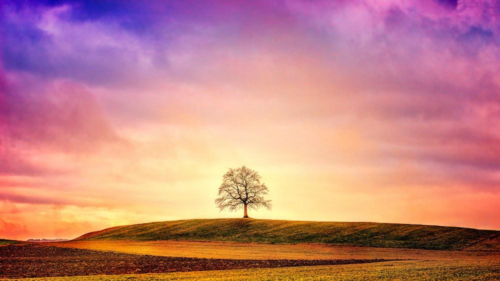 silhouette of tree on green field
