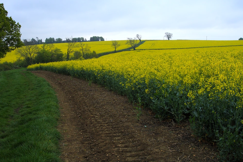 photography of yellow petaled flower field