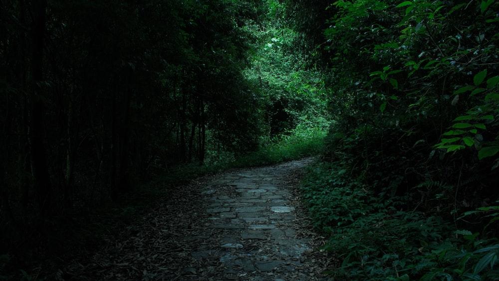 gray road beside trees