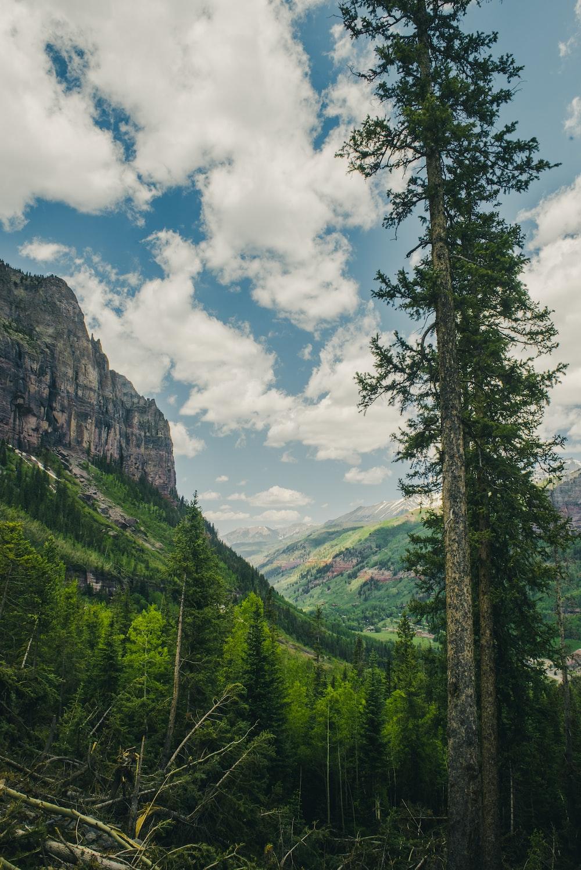 green leaf tree beside mountain