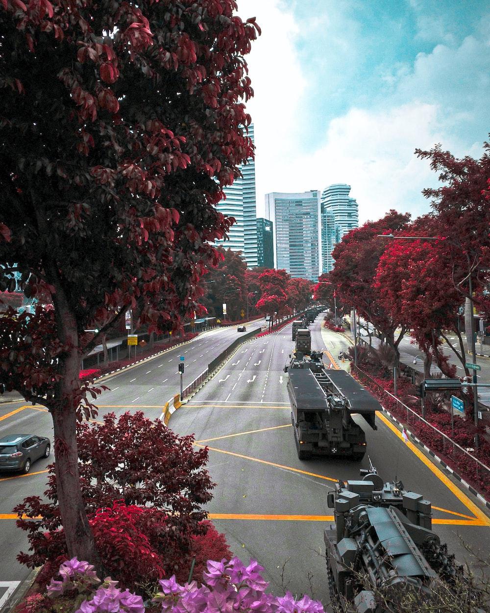 vehicles near trees