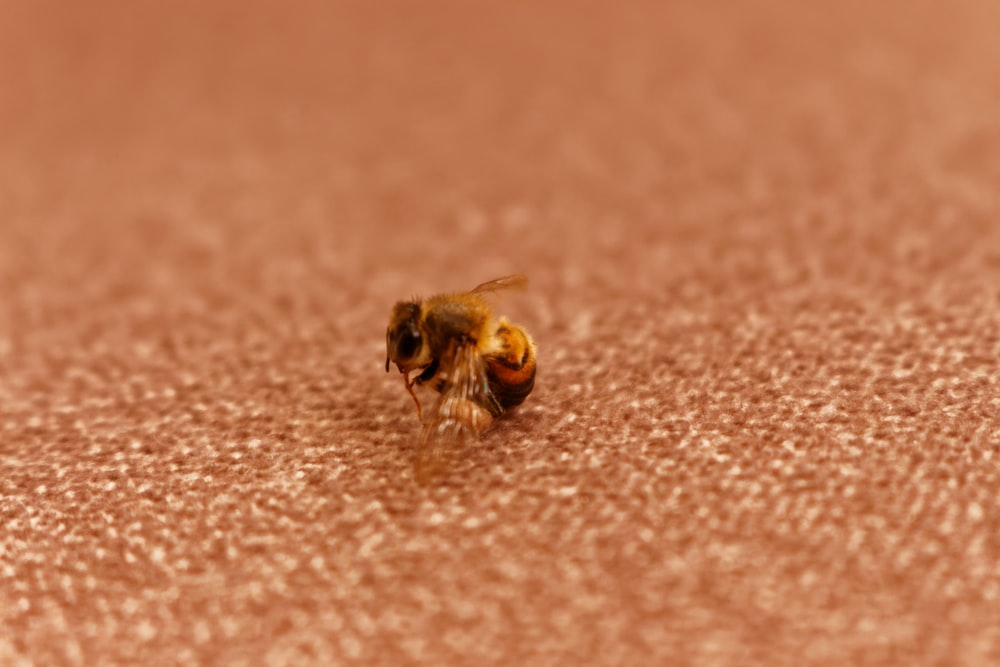 shallow focus photo of yellow bee