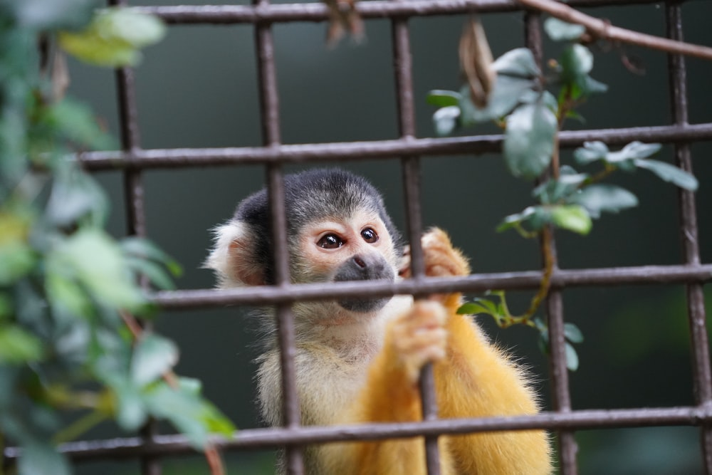 white and gray monkey near brown metal cage beside green leaf lant