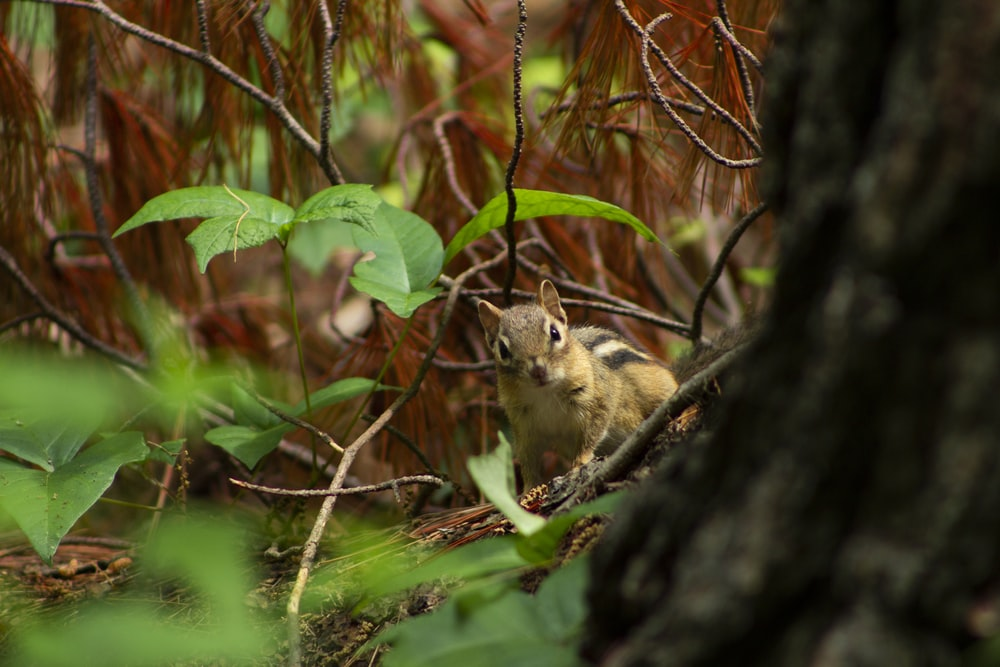 shallow focus photo of brown squirrel
