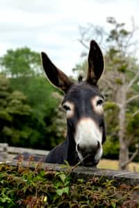 Statistics, Economics and Research on Donkey  donkey stories