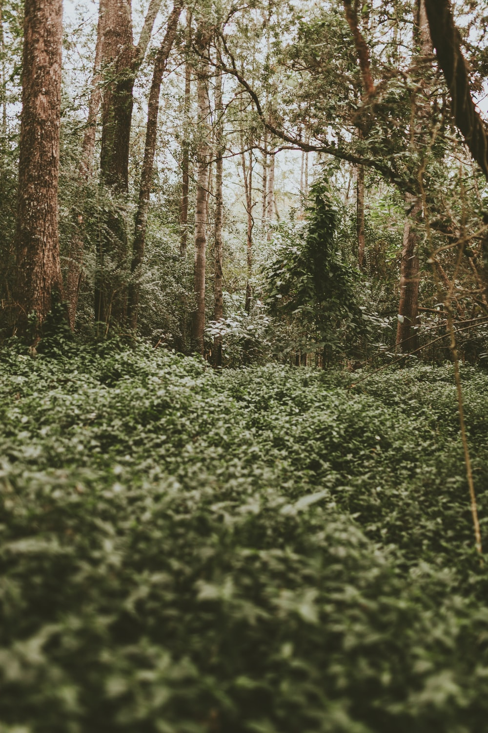 green plants under trees in the forest