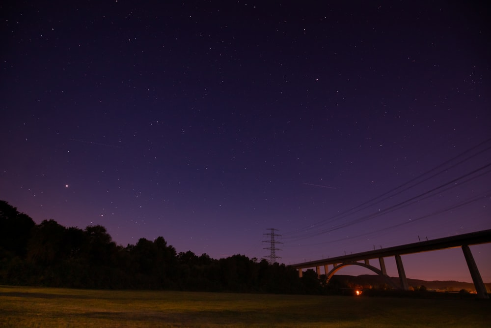 concrete bridge surrounded with tall and green trees during night time
