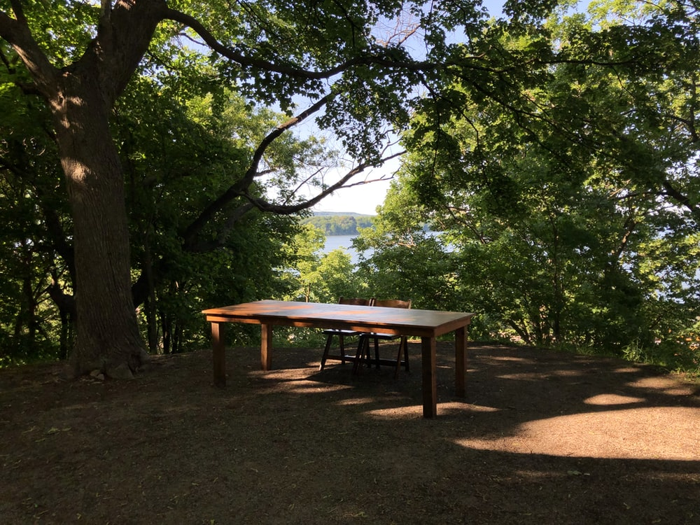brown wooden table under tree