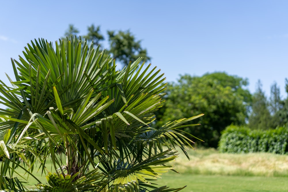 green grass plant and grass field