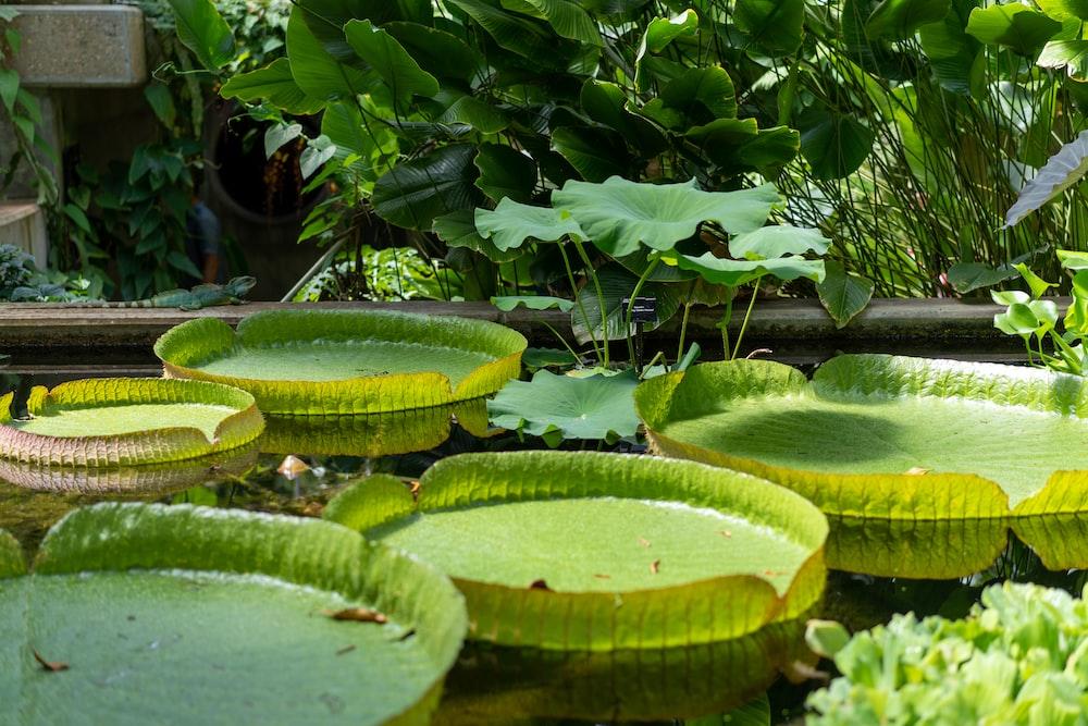 water plants near plants