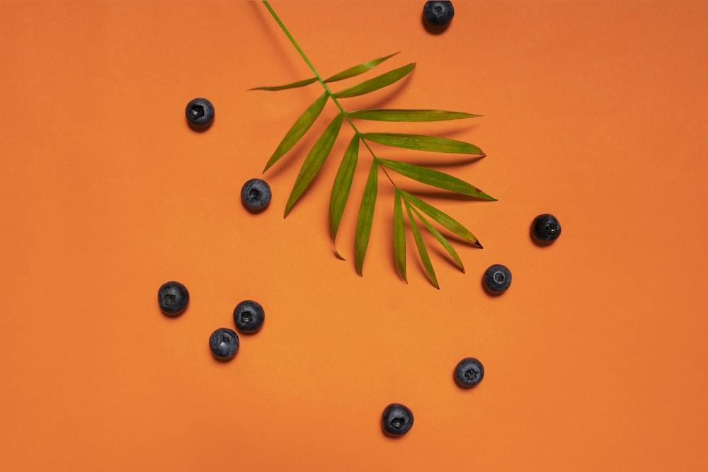 green leaves and blackberries