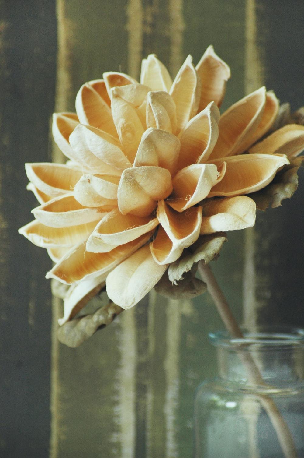 beige-petaled flower