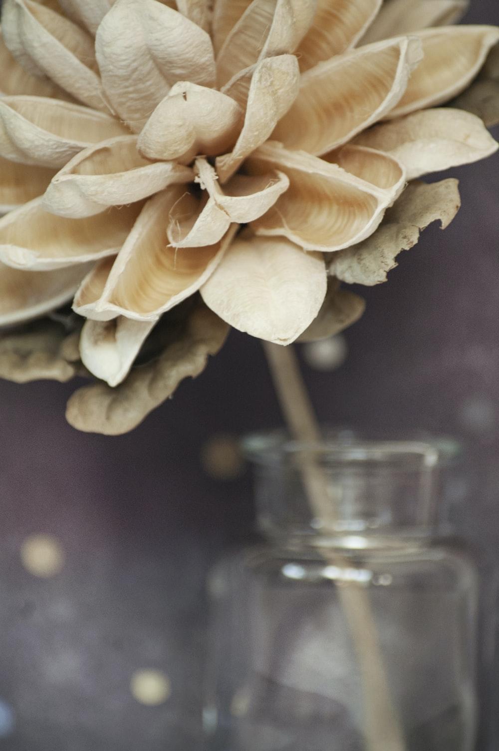 beige flower on clear glass vase