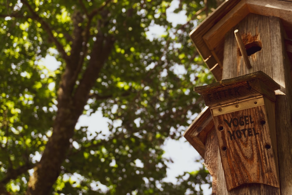 brown wooden birdhouse during daytime close-up photography