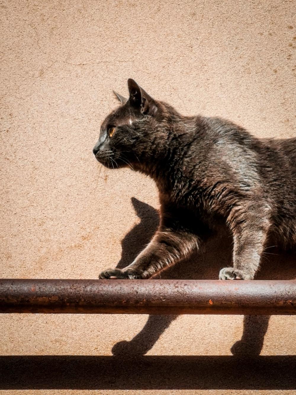 photo of gray cat