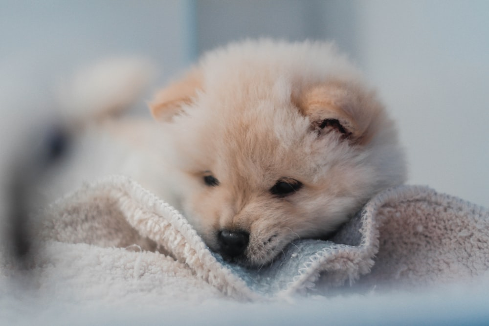 shallow focus photography of puppy