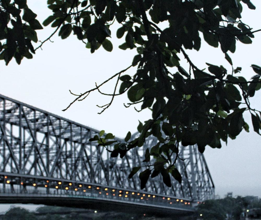 gray steel bridge near green leaf tree