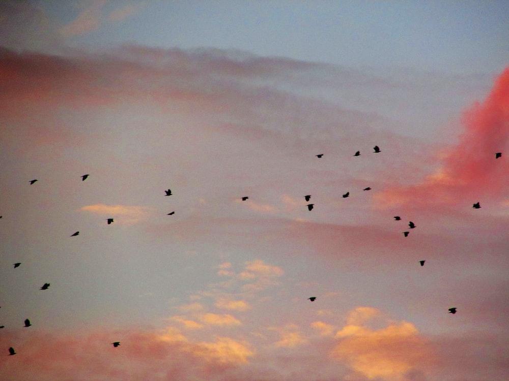 birds in flight among clouds