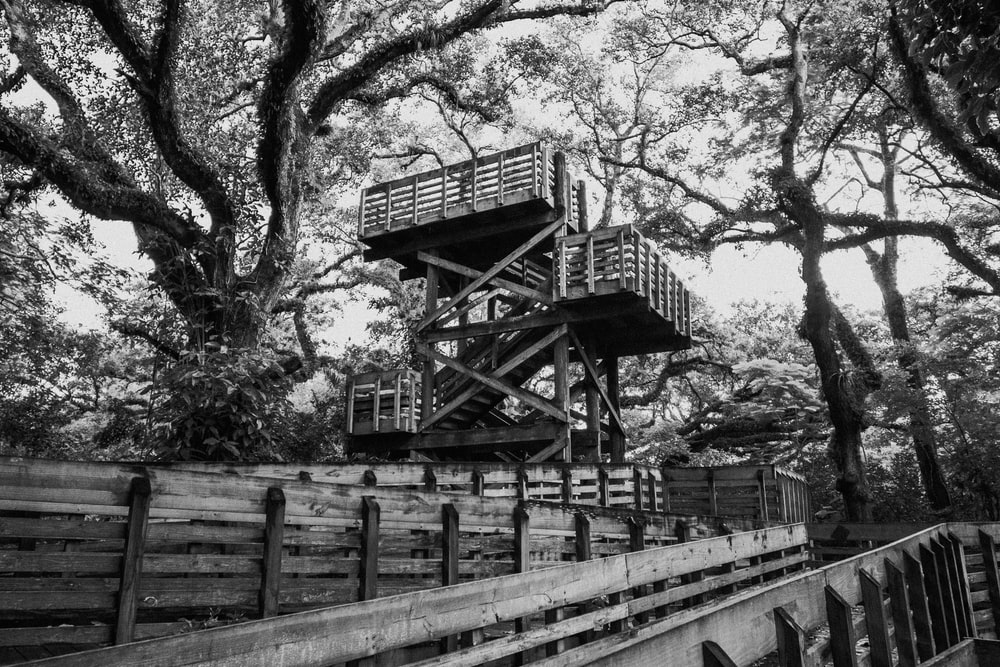 grayscale photo of tree house