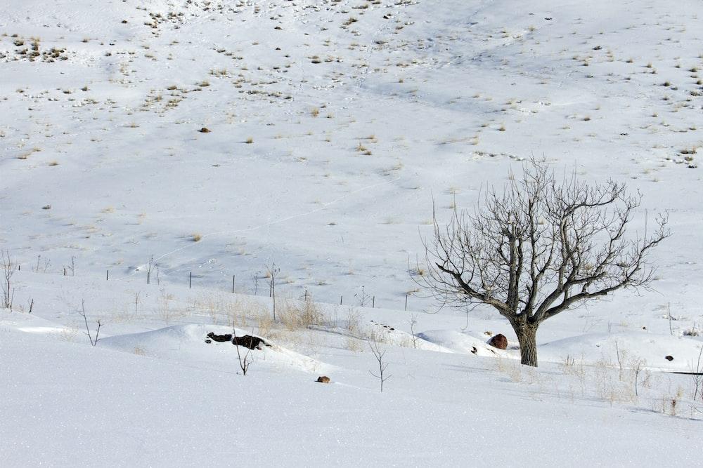 bare tree on snowfield