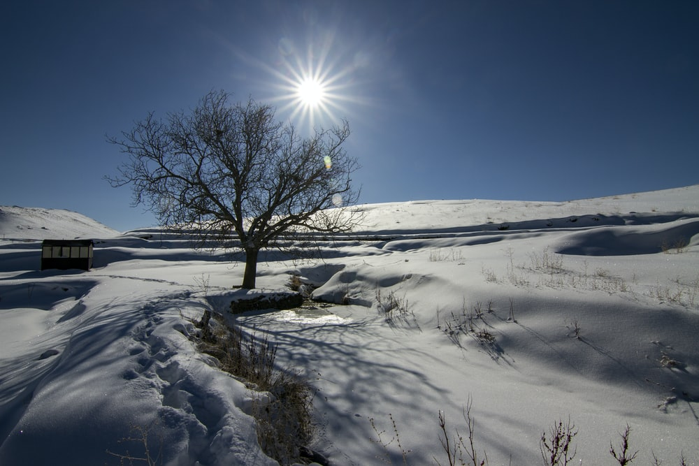 bare tree surrounded with snow