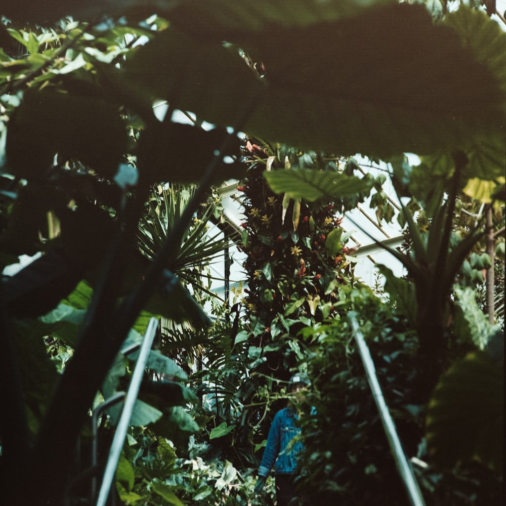 man standing beside plants