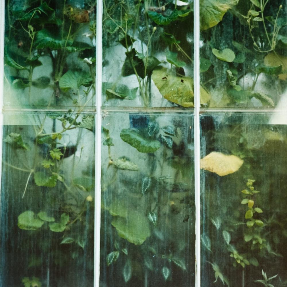 green vine plants