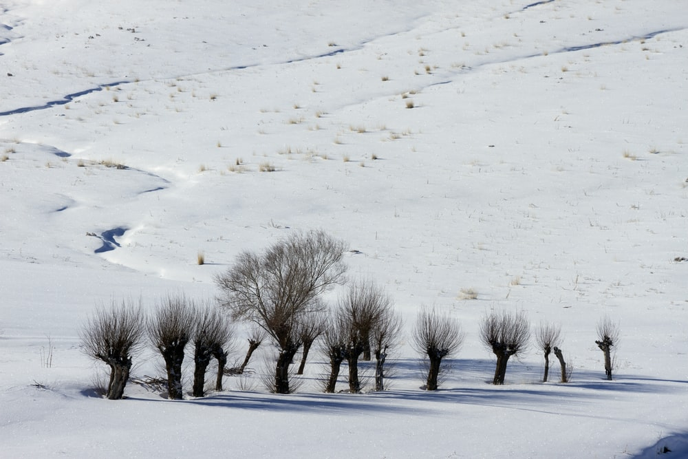 bare trees in field