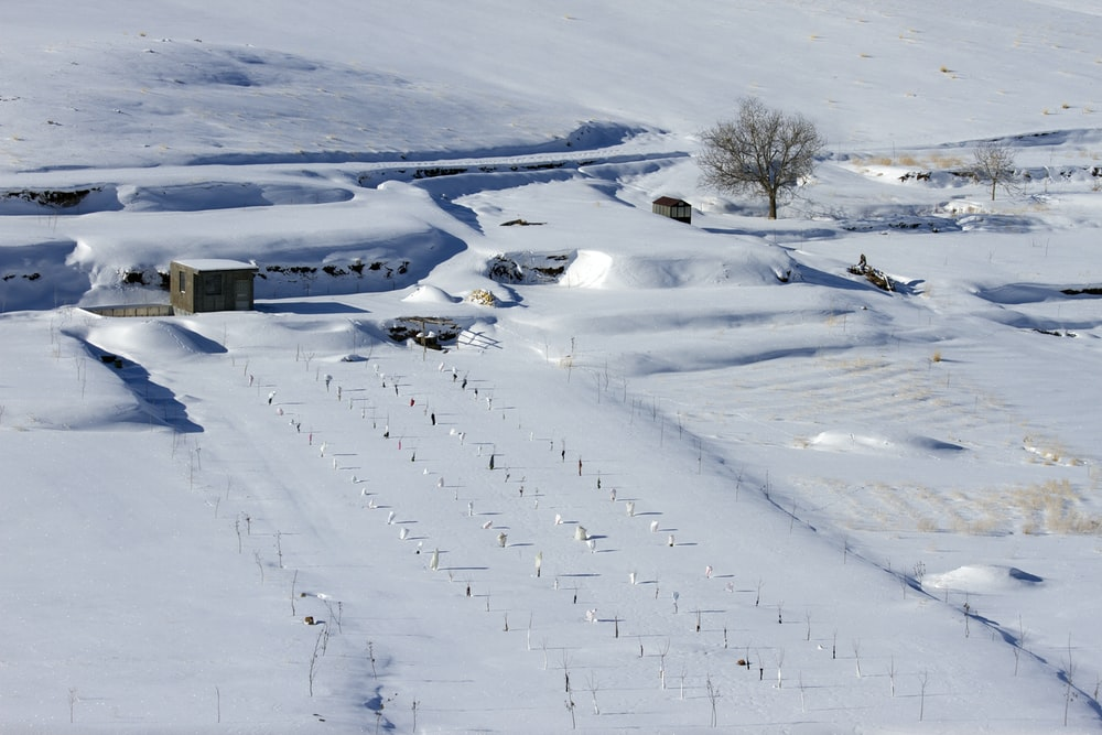 house surrounded with snow