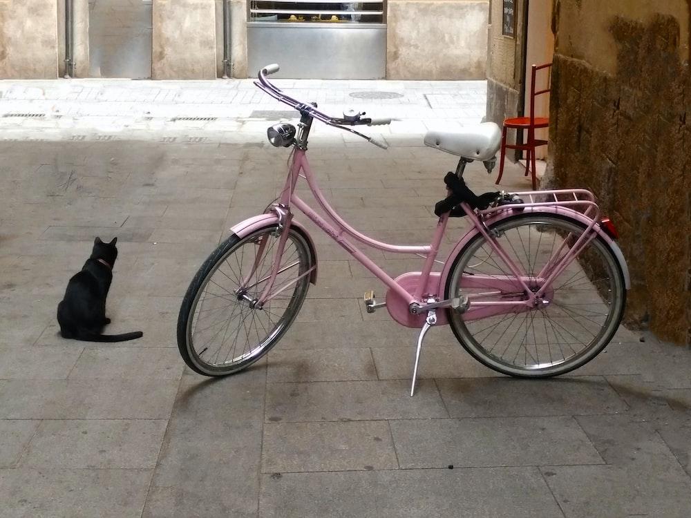 pink retro bike parked in courtyard beside black cat